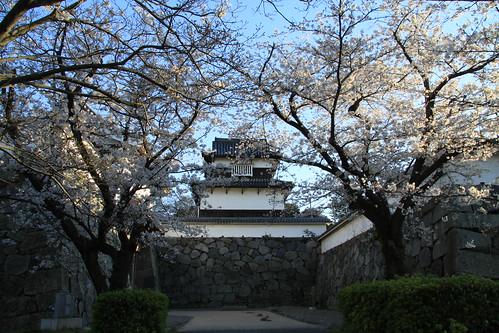 Castle Gates Sakura