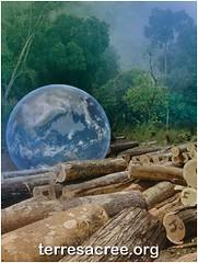Terre Sacrée - Yanomami