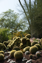 barrel cactus bed
