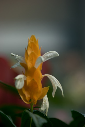 A  tripod and a sharp lens make it a snap to get images like this at your local conservatory.
