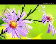 VERSOS E FLORES - Verses and Flowers