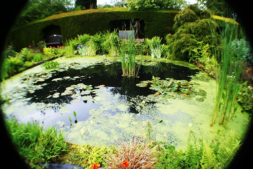 Garden Pond at Greenbank
