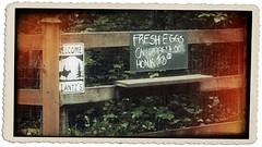 Honk....for fresh eggs (MaxyGreat) Tags: rural country fresh eggs fresheggs fiatluxphotography