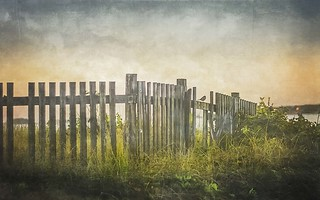 Longing for Summer Fence