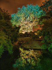 Tree of Life by night - WDW Jan 2008 (CodyWDWfan) Tags: world life longexposure vacation reflection tree water animal night island orlando florida kingdom olympus disney explore disneyworld wdw waltdisneyworld walt discovery hdr animalkingdom treeoflife disneysanimalkingdom disneys discoveryisland e510 explored olympuse510