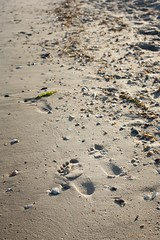 trace (DanjaMan51) Tags: sea summer sun holiday beach nature canon eos 50mm sand f14 trace ukraine 5d sight ef     eos5d     killadanjagmailcom danjaman killadanja katranka tatrbunary