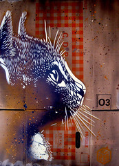C215 - Cat (C215) Tags: streetart art french graffiti stencil christian pochoir masacara szablon c215 schablon gumy piantillas