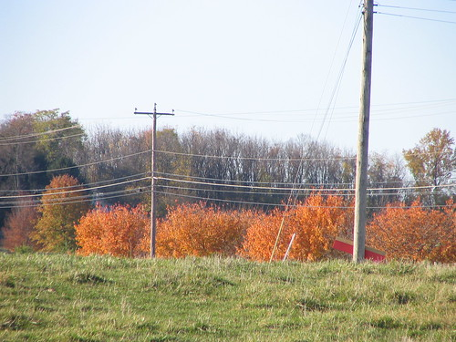 Stand of Orange (with Poles)