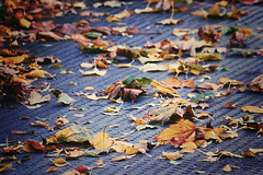 Fallen (tad2106 - Trudie Davidson Photography) Tags: autumn fall leaves tarmac autumnleaves autumnal patter
