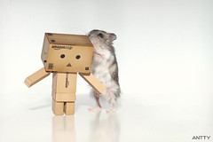 Sharing Secrets (Antty+) Tags: toys weird amazon singapore funny little odd hamster gogo danbo danboard danboru antty antontang