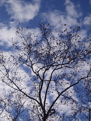 Just A Tree and Some Clouds (Jenn Pascoe) Tags: tree clouds imasucker
