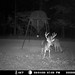Buck Trail Cams
