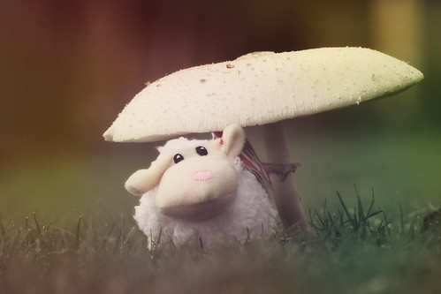fairy tale sheep
