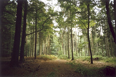 Woods - 03Oct09, Mnster (Germany) (philippe leroyer) Tags: wood tree film nature 35mm lomo lca xpro lomography woods path slide lomolca scan 200 analogue 135 35 ektachrome arbre chemin fort bois argentique diapositive ekta diapo pellicule positif lomographyslidexpro200