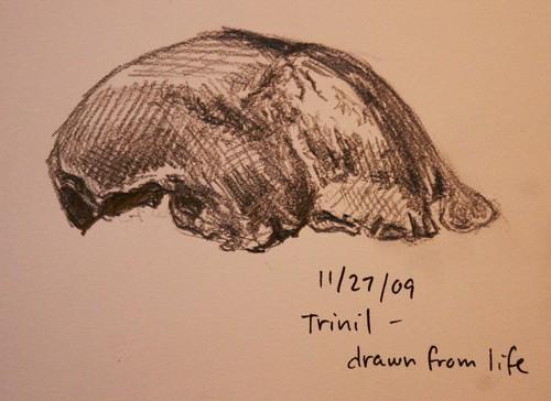 Trinil skull sketch