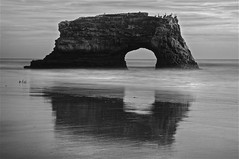 Natural Bridges; Where Are the Monarchs? - Santa Cruz, Ca - B&W (Rich Capture) Tags: california trees santacruz pelicans water leaves birds rock clouds canon coast sand surf grove richard eucalyptus migration milkweed formations naturalbridges seaguls monarchbutterflies ef2470mmf28l unitedstatedofamerica 5dmark2 richardmatyskiewicz matyskiewicz