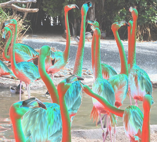 10 funky flamingos