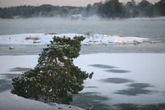 Kallvik Dec 09 (kansalainen) Tags: helsinki vuosaari kallvik carlzeiss135mmf28