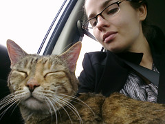 Kitty in my lap, @madrox driving to DAL, then a hop, skip, and a jump to SJC. Not sick.