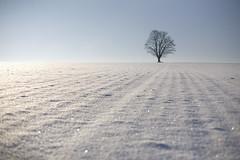 (Alt_Gr *slowly getting back* www.nilseisfeld.de) Tags: schnee snow tree dresden dof baum gegendiesonne twtmeiconoftheday gettygermanyq4
