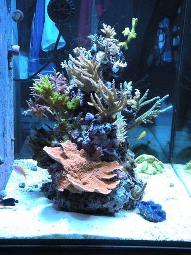 Show Me Your Awesome Nano Aquascape Page 4 Reef Central Online Community