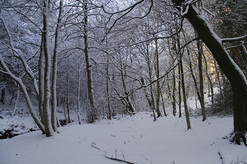 Visitation of snow