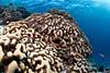Potatoes, potatoes... (Lea's UW Photography) Tags: underwater fisheye maldives fins malediven tokina1017mm unterwasserfoto leamoser kartoffelkorallen potatocoral