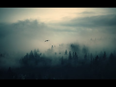 Lake Sammamish South (sparth) Tags: above seattle park morning trees lake bird pine clouds early washington state seagull south flight foggy atmospheric sammamish 70200f4l 70200l impressedbeauty 5dmarkii fogabovethetrees
