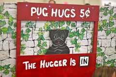"Golden Gate Kennel Club Dog Show: ""Pug Hugs 5¢"""
