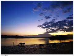 2 Feb: Kerbau Sungai Mengkabong (sam4605) Tags: morning sky sunrise river landscape ed buffalo bluesky olympus mount malaysia borneo e3 gunung sabah kinabalu pagi sungai pemandangan matahari tuaran zd gunungkinabalu kerbau sabahborneo 1442mm kinabalumount mengkabongbridge sam4605 sungaimengkabong jambatanmengkabong