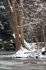 Brandywine (Winter) - Down Creek