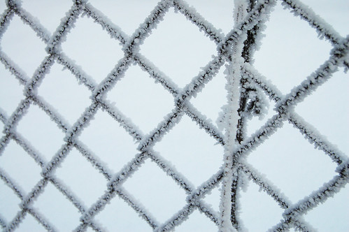 Frosty fence (Photo by iHanna - Hanna Andersson)