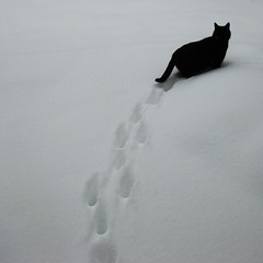 C = Cat (on the road again) (Frizztext) Tags: schnee winter blackandwhite snow animal animals cat square lyrics kat gallery existentialism galleries gato abc katze pia willienelson 500x500 ontheroadagain frizztext poez thelittledoglaughed impressedbeauty winner500 kinderreim abcdiekatzeliefimschnee