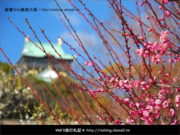 【via關西冬遊記】大阪城天守閣!冬季限定:梅園梅花盛開9