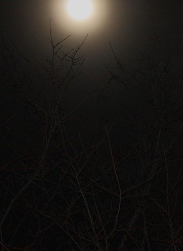100227 Rising Moon
