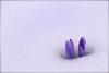"""..eccoci.... siamo stufi della neve. ("""" paolo ammannati """") Tags: flowers italy italia natura tuscany neve fiori toscana inverno distillery verna casentino ghiaccio natureselegantshots effettinaturali fotoconneve naturemaster"""