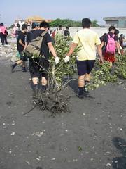 學生合力移除紅樹林