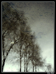(Sarah Shiri) Tags: trees reflection rain reflex sara sony shiri baroon w170
