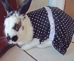 fashion cute (Evelin Marques) Tags: cute polkadots fofa coelhinha rabbitmini minicoelho