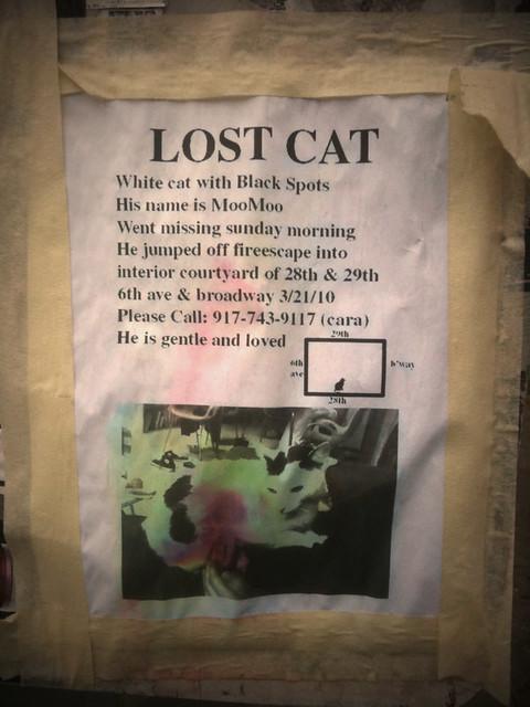 redesigned lost cat poster #walkingtoworktoday
