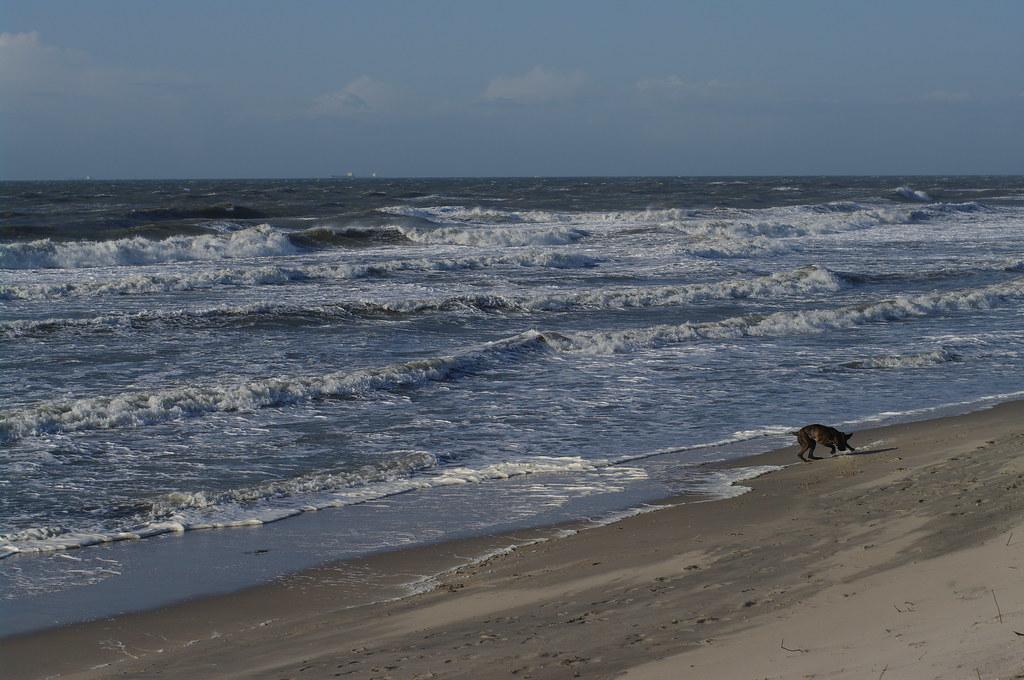 dog playing on the beach near the sea