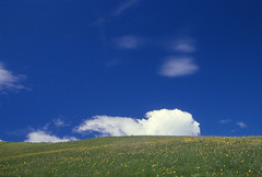nuvolabaldo (El Salvanel) Tags: italy alps italia nuvola fuji minolta dia cielo fiori alpi prato trentino sensia 100iso pellicola montebaldo prealpi pascolo baldo fioritura alpeggio