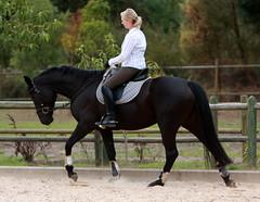 Neuland Hepburn (neulands) Tags: horse cheval young pferd hepburn svenja broodmare sporthorse hebpurn neulandstud maredressage neulandhepburn