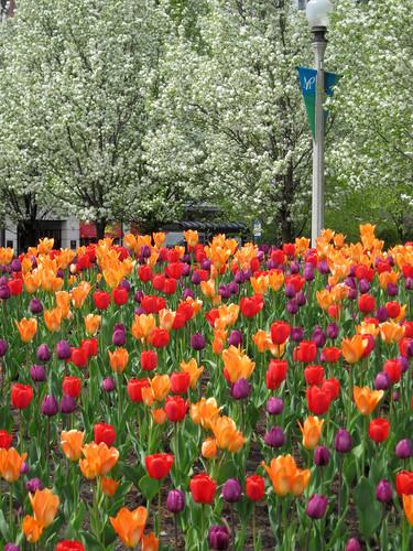 Millennium Park Spring 2010-8
