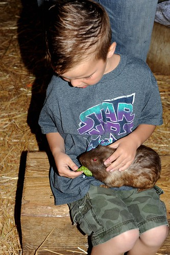 Feeding guinea pig at Zoomars