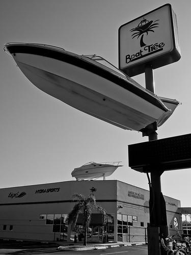 Dead Boat Tree