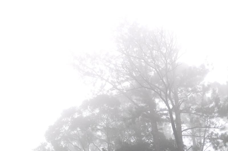 Fraser Hill11