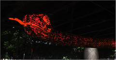 The Snake (geoff_sharpe) Tags: chinese new year snake nightscapes sydney city
