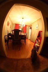Fisheye diningroom cat (hpulley) Tags: fisheye peleng8mmf35 canondigitalrebeleost1i pentaxscrewtoefmountconverter