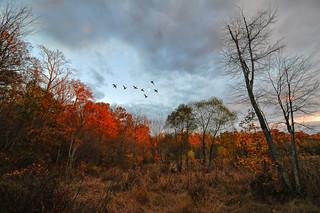 Huntley Meadows, Twilight
